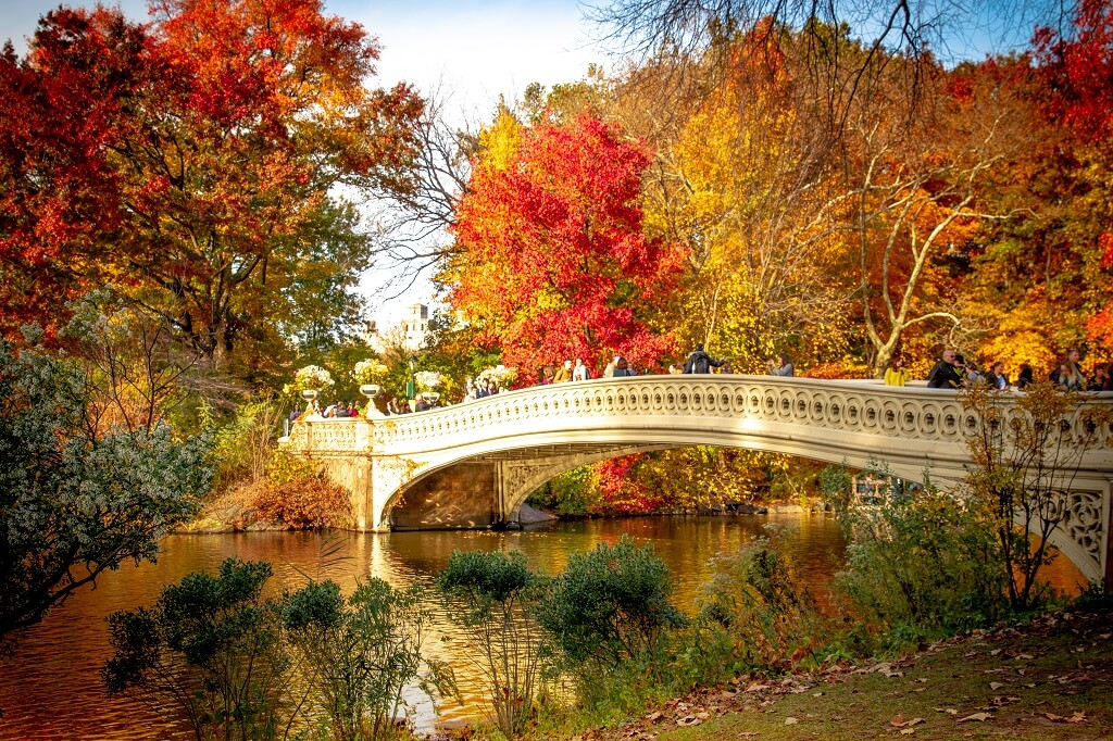 central park, bow bridge, fall foliage